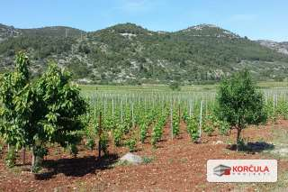 Land in famous Korčula vineyard (Pošip) area