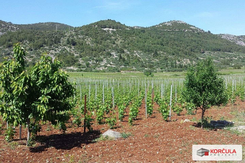 Land in famous Korčula vineyard (Pošip) area
