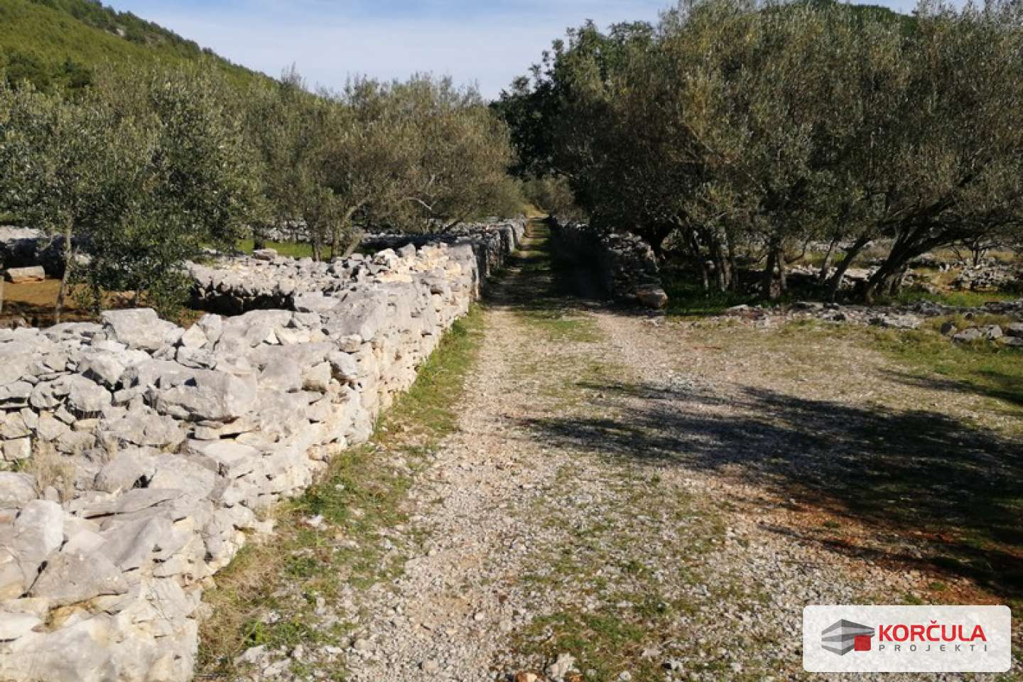 A large property with olive grove amid preserved nature - western side of Korčula island